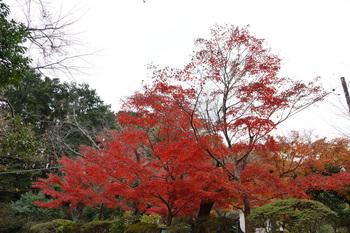 genjiyama00482B.jpg