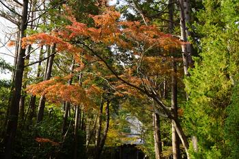 jufukuji00497.jpg