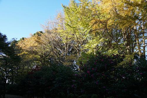 kamakura202s_DSC07212.JPG