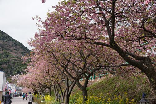 kawadu108b_DSC04383.jpg