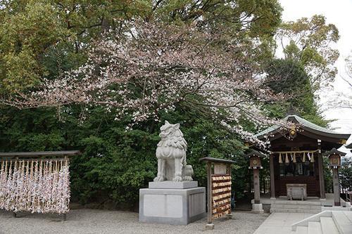 samukawa108s_DSC05554.JPG