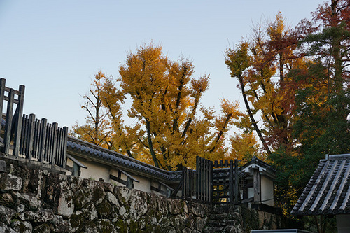 shikoku608s_DSC03768.JPG