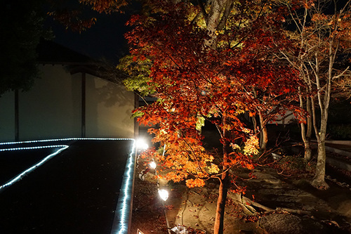 shikoku821s_DSC05686.JPG