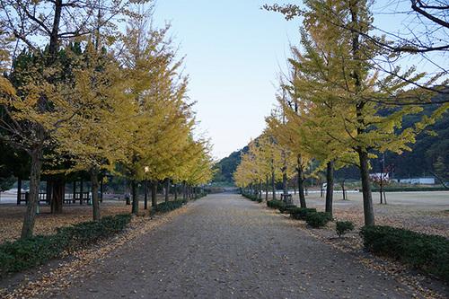 shikokuC17s_DSC01216.JPG