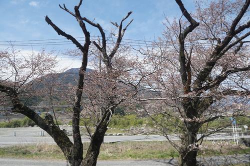 yamanashi210s_DSC04767.jpg